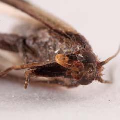 Mehlkäfer Bekämpfen kastein apex schädlingsbekämpfung kleidermotten bekämpfen